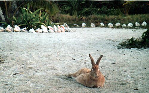 Lucky the bunny