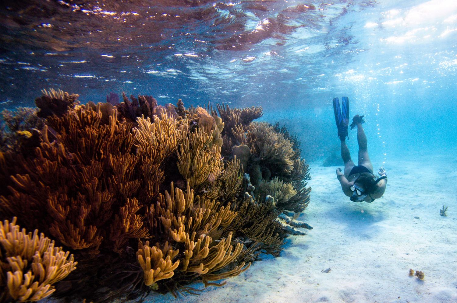 """Snorkeling at """"The Aquarium"""", about a 1/2 mile from our island"""