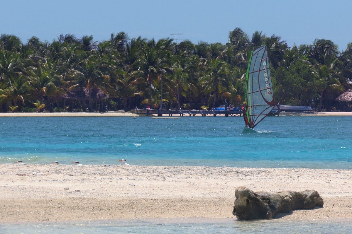 Windsurfing Belize... we have great gear for beginners up to expert sailors