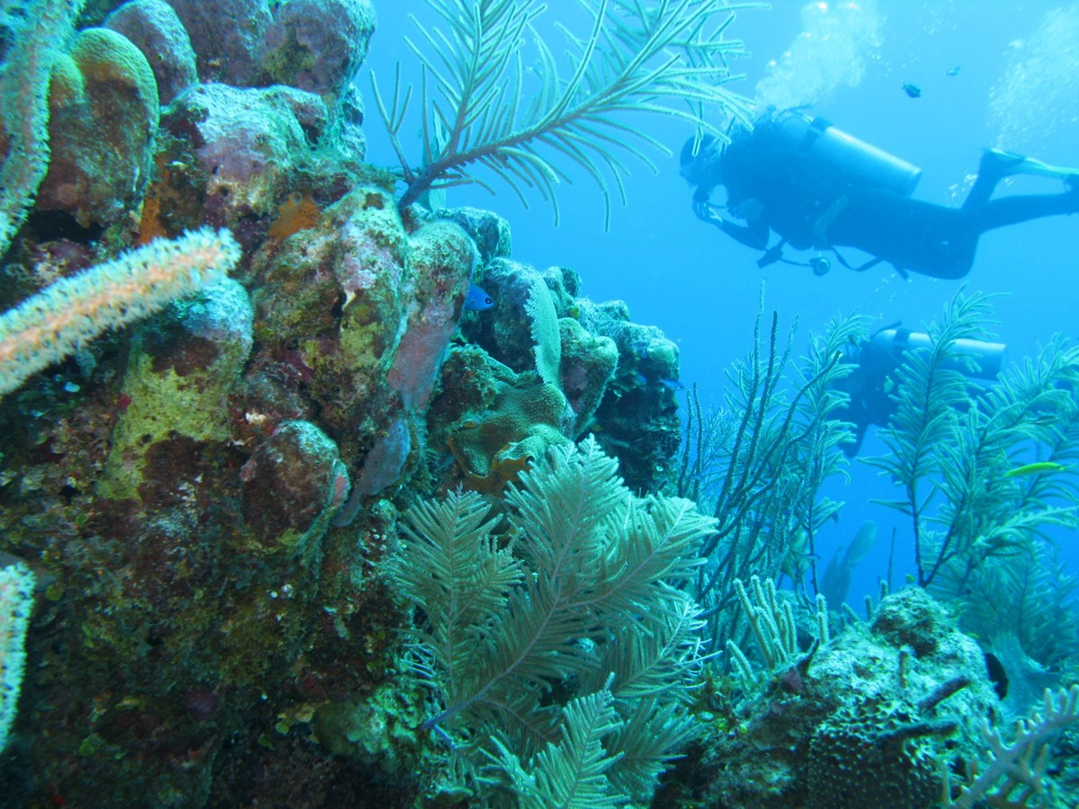 Diving Long Caye Wall