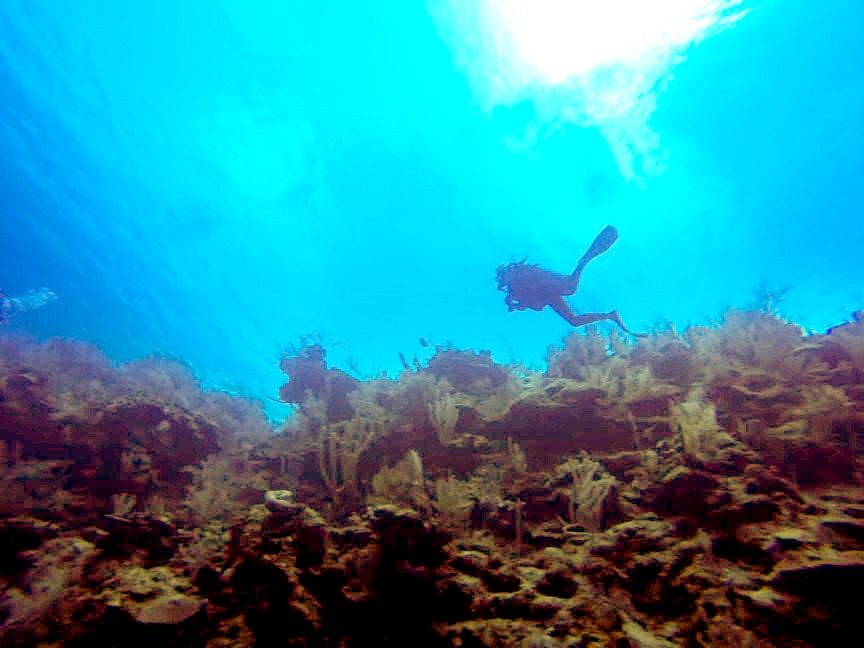Diving The Wall, Glover's Reef, Belize