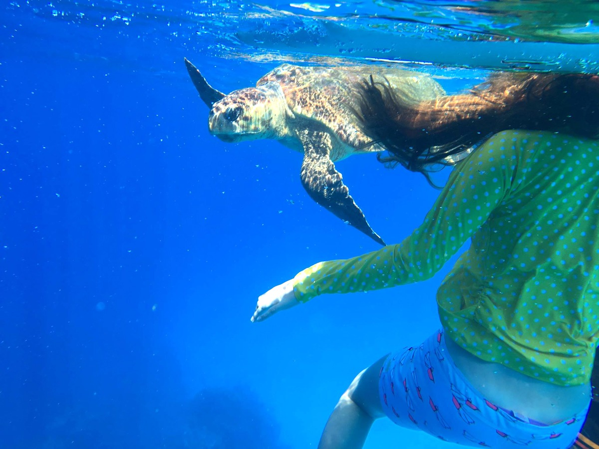 Snorkeling with a Loggerhead Turtle!