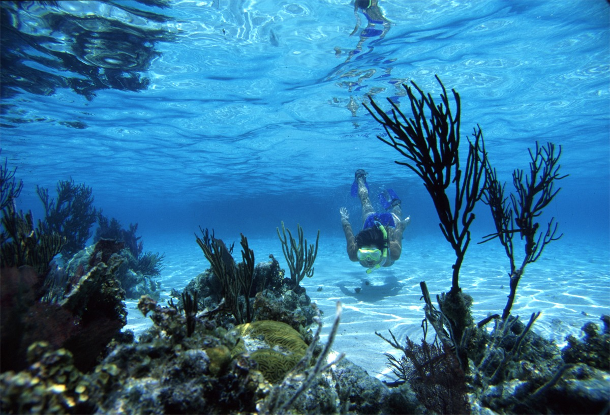 Go snorkeling, Glover's Reef, Belize