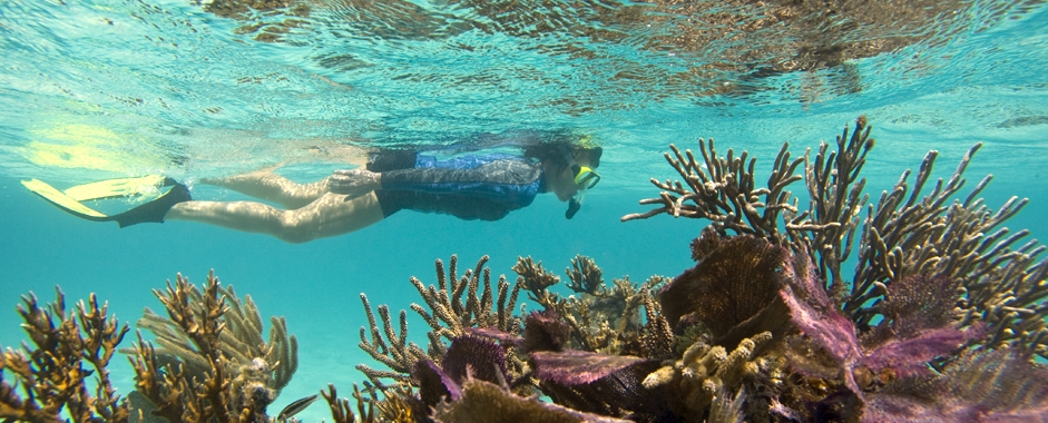 picture of woman snorkeling over some coral reef in belize