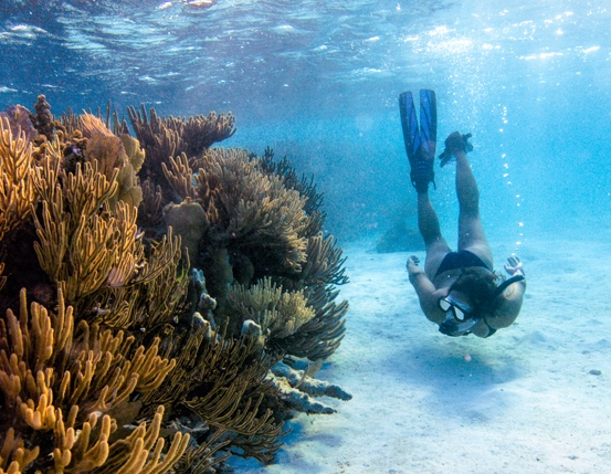 picture of woman snorkeling down by a coral reef in belize