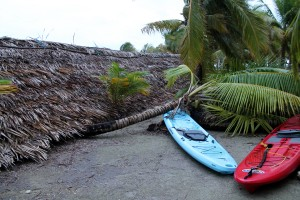 Palm trees down on Long Caye