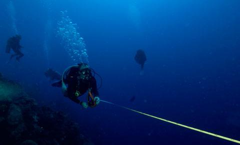 divers hunt lionfish