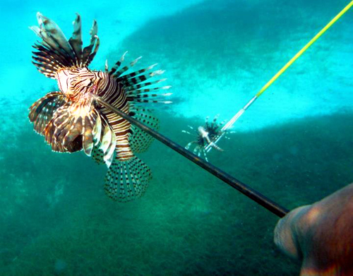 Spearfishing lionfish in Belize