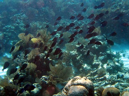 Belize snorkel