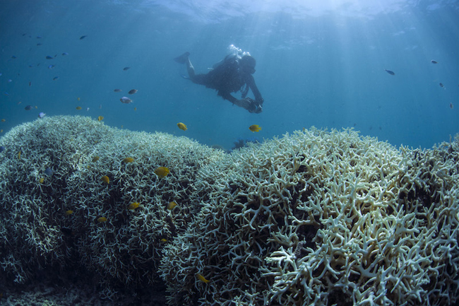 Coral-Bleaching-at-Lizard-Island4