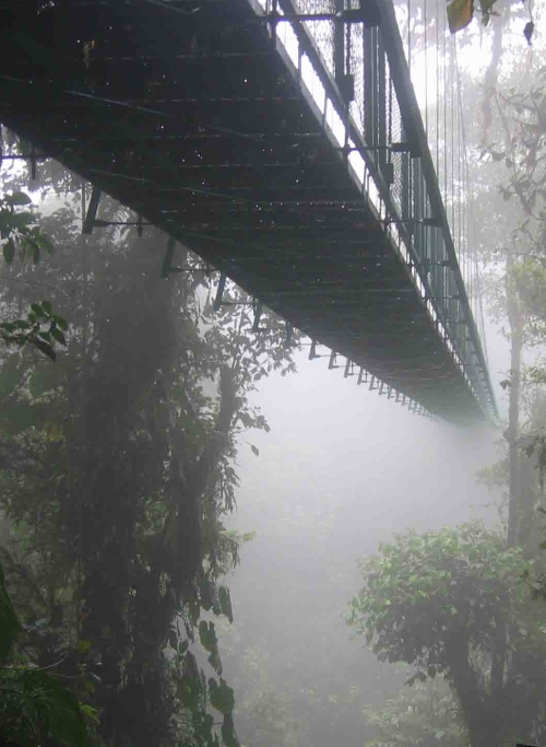 Picture of the Santa Elene cloud forest skywalk, Costa Rica