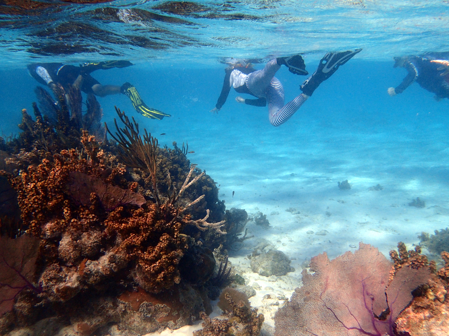 snorkeling glovers reef in belize